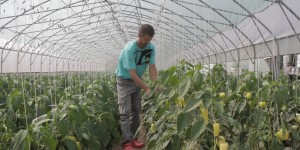 xBiH_Public_Call_Commercial_Agriculture